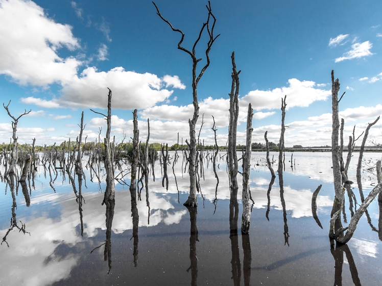National Park Alde Feanen Friesland
