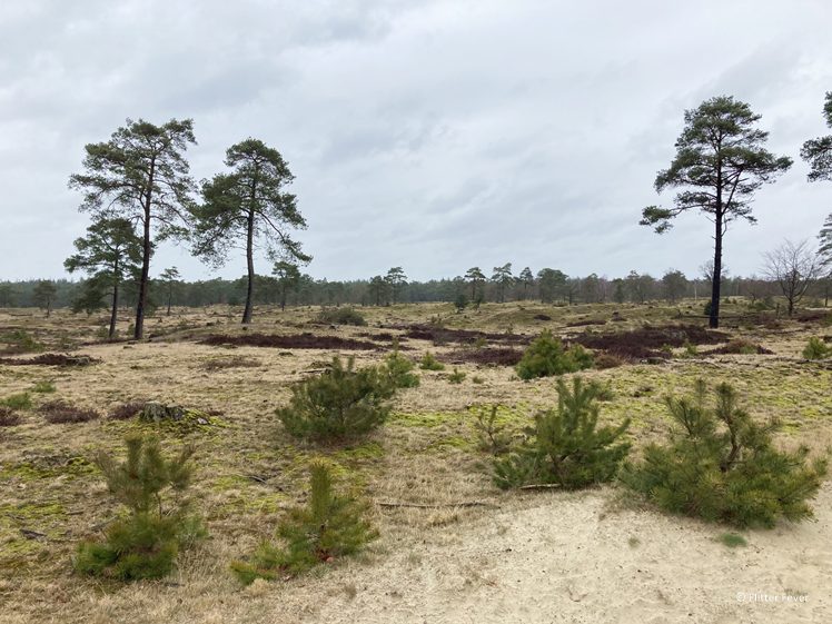 Terwisscha walk in National Park Drents-Friese Wold Southeast Friesland