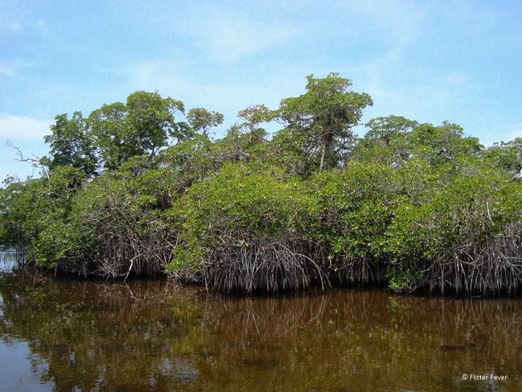 Everglades National Park mangrove vegetation Florida round trip
