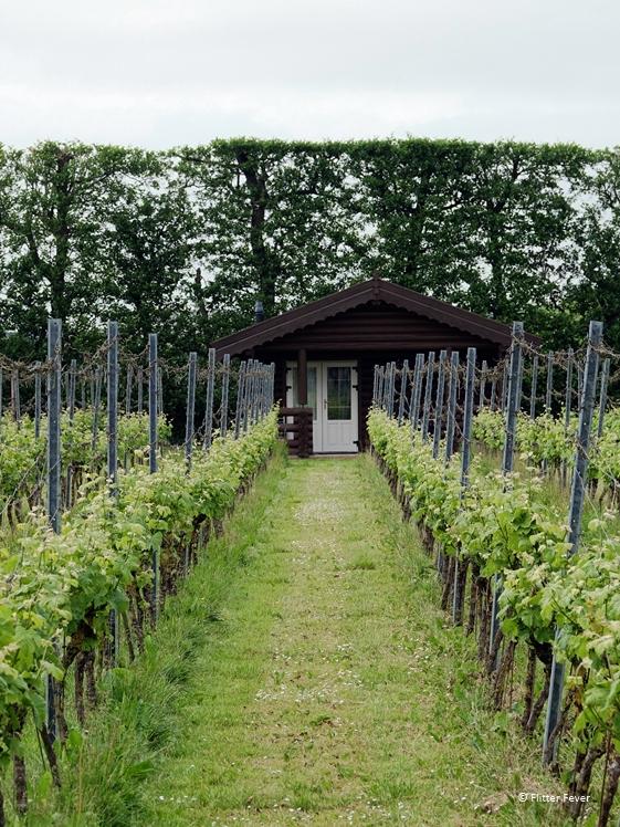 Logeren bij een Nederlandse wijngaard Saalhof