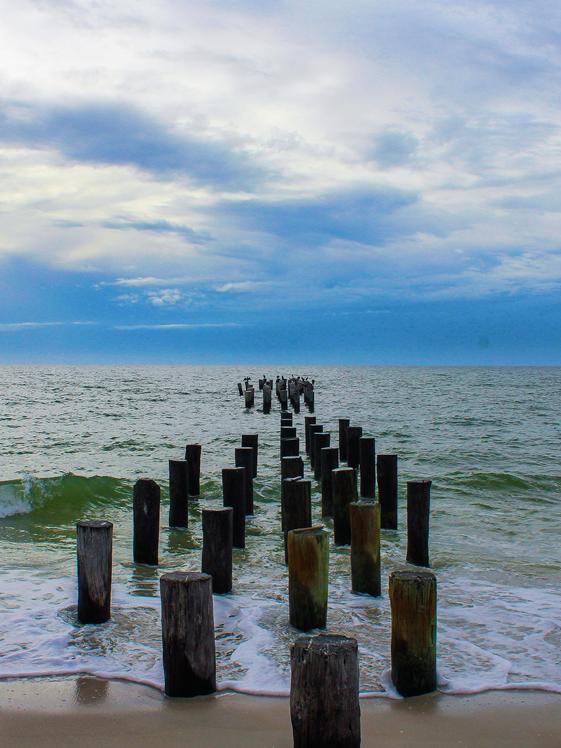 Naples Florida palen strand zee
