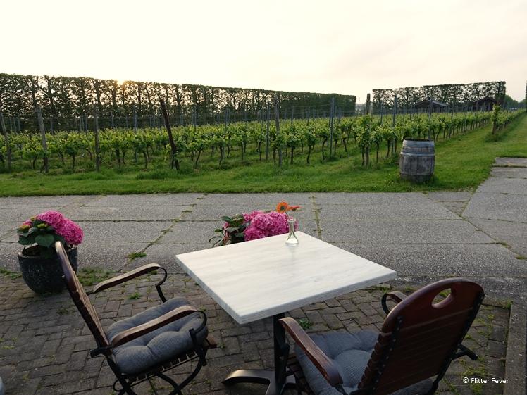 Sunset on terrace vineyard