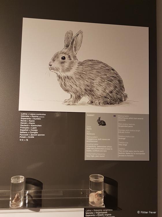 Er valt nog veel te leren over konijnen