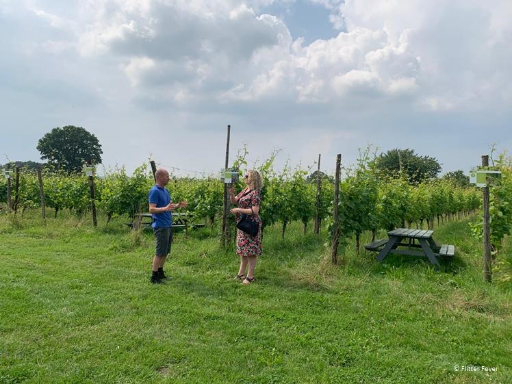 Nederlandse wijngaard De Plack