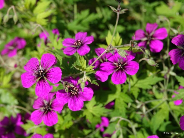 Roze bloemetjes in de tuin van Domein Holset