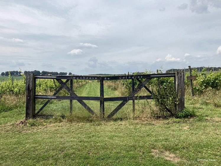 Een van de wijngaarden van De Colonjes in Groesbeek