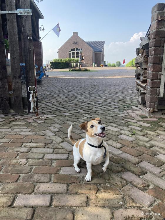 Het schattige hondje bij Wijnhoeve de Heikant Groesbeek