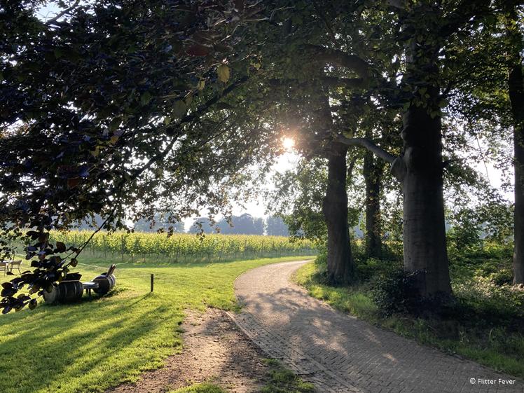 Zon achter de bomen bij wijngaard Groesbeek